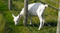 choose_the_right_fence_type_for_your_livestock_1