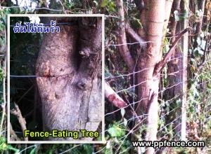 ต้นไม้กินรั้ว รั้วตาข่าย ทนสนิม